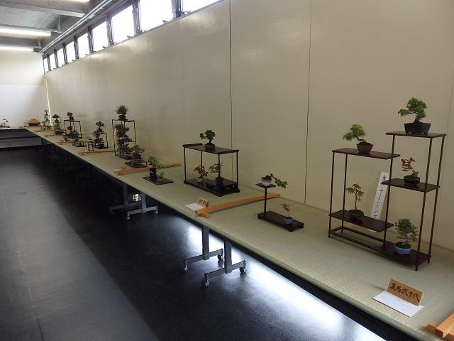 春の福島小品盆栽展