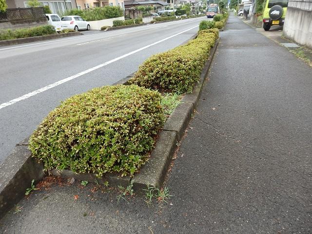 福島市南向台の街路樹周辺の除草